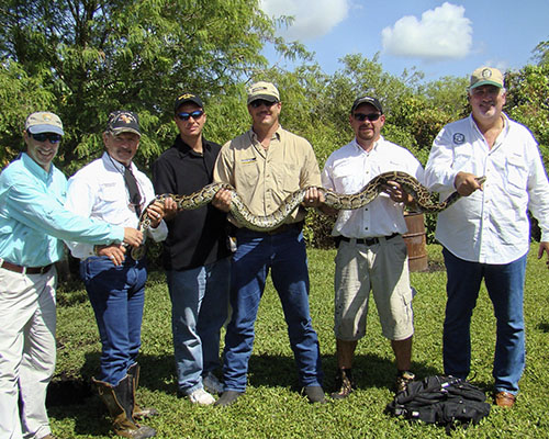 Six grown men wearing baseball caps with their arms out and holding a python in their hands