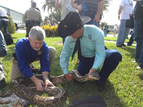 florida-putting-squeeze-invasive-snakes