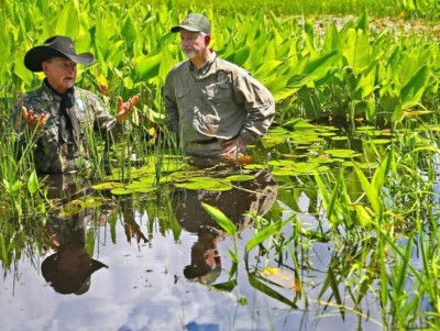 Two men chest deep in swamp water