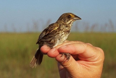 Little bird perched on a hand